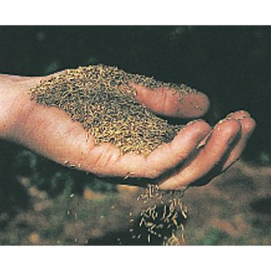 Canada Green Grass Seed