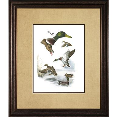 Red-Headed Duck Wall Art Print
