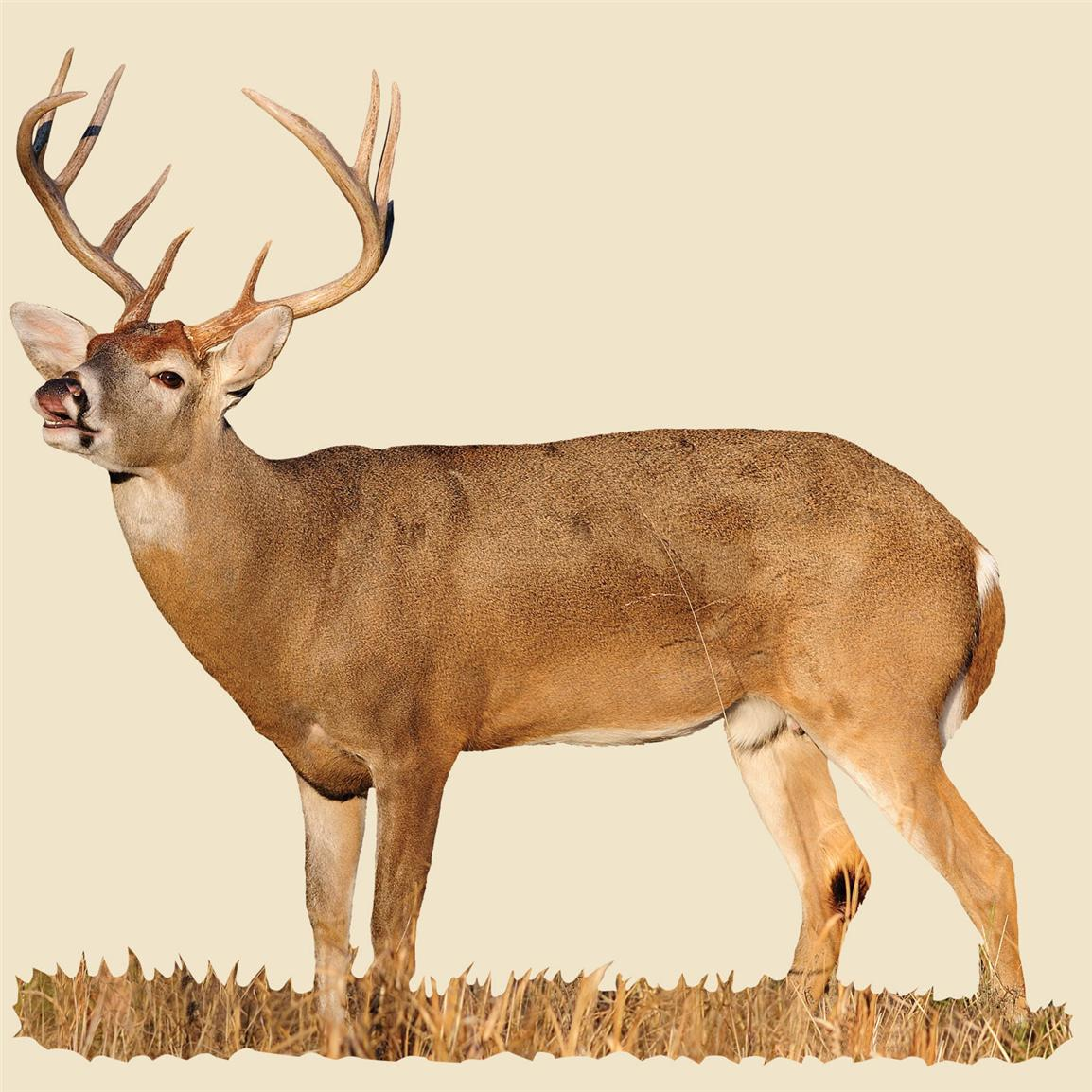 Whitetail Buck with Curled Lip Indoor Wall Graphic