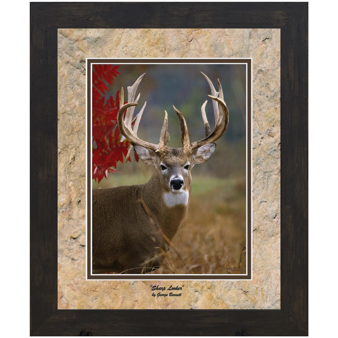 "George Barnett ""Sharp Looker"" Framed Photograph, 11x14"""