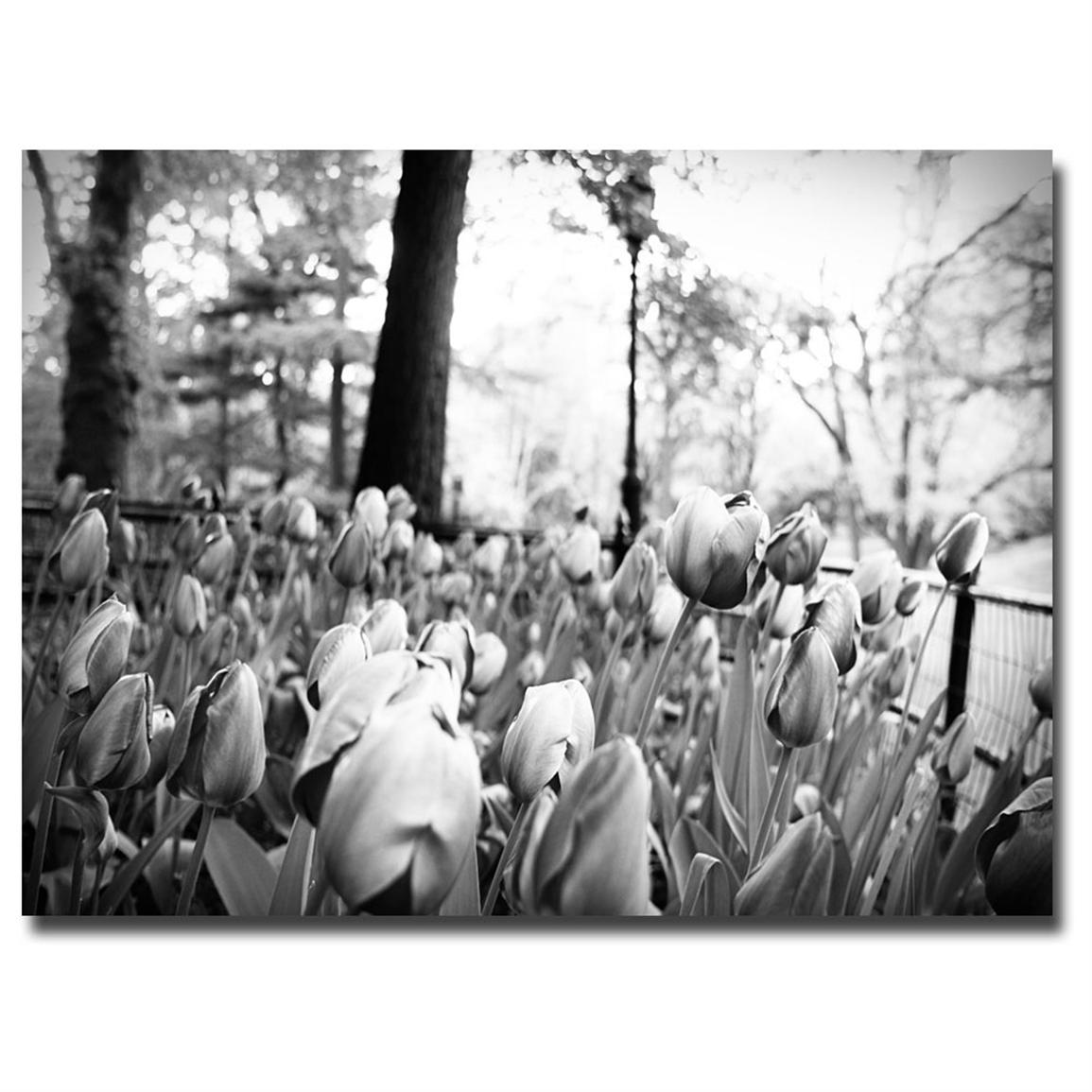 """Blooming Tulips"" Canvas Art by Ariane"