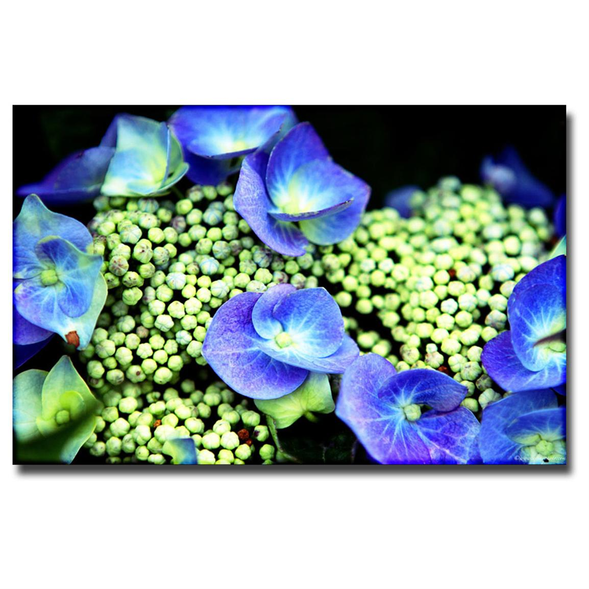 """Hydrangea"" Canvas Art by Ariane Moshayedi"