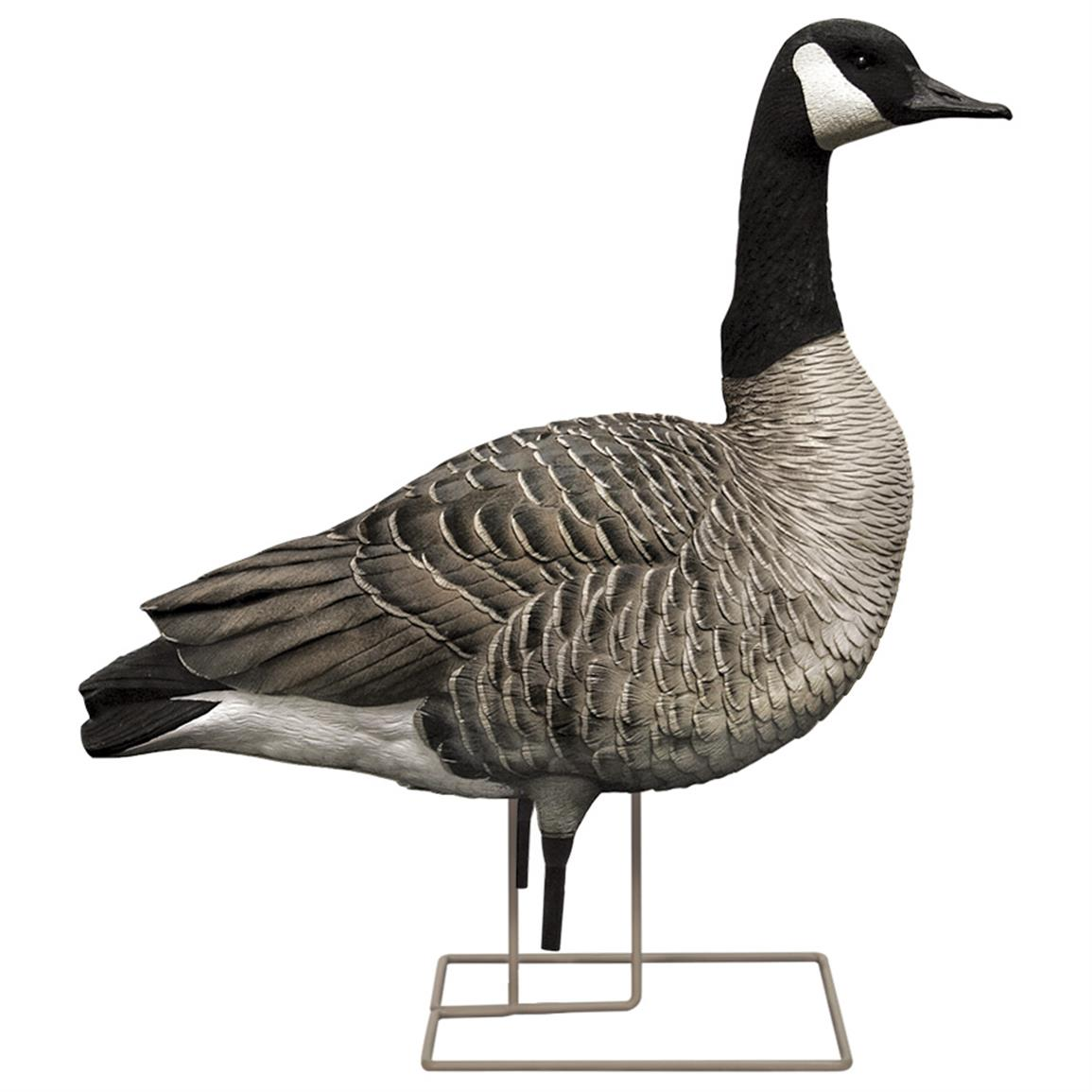 Avian-X Painted Honker Sentry Canada Goose Decoys, 6 pack
