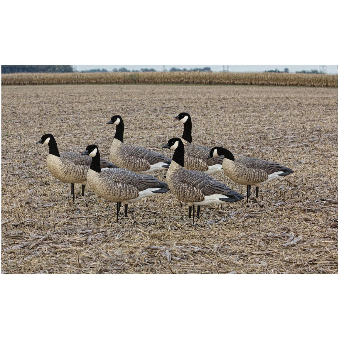 Avian-X Flocked Active Lesser Goose Decoys, 6 Pack