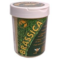 Tecomate Hunting Plot Pounder, Brassica