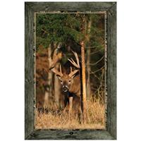 """Whitetail Buck Rubbing Tree Trunk"" Framed Indoor Wall Graphic"