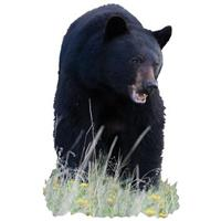 Black Bear Indoor Wall Graphic, Teeth Showing