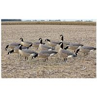 Avian-X AXF Outfitter Flocked Lesser Decoys, 12 Pack