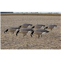 Avian-X Flocked Feeder Lesser Goose Decoys, 6 Pack
