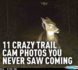 Crazy Trail Cam Photos You Never Saw Coming