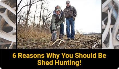 6 Reasons Why You Should Be Shed Hunting