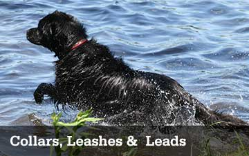 Collars, Leashes & Leads